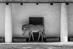 Berlin Zoological Garden, Berlin, Germany